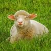 Tuyệt chiêu dưỡng da nuột nà bằng mỡ động vật